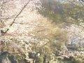 長野 須坂市臥竜公園  桜 サムネイル