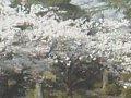 山形 上杉神社ライブカメラ  桜 サムネイル