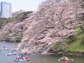 東京 千鳥ヶ淵  桜 サムネイル