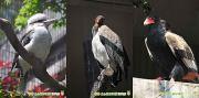 東山動植物園 酉 年賀状素材ダウンロード 年賀状無料素材見本サムネイル画像