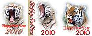 虎写真館[TORA3]年賀状無料素材 虎画像,トラ写真 年賀状無料素材見本サムネイル画像